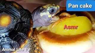 ?Asmr turtle love pancake shri…