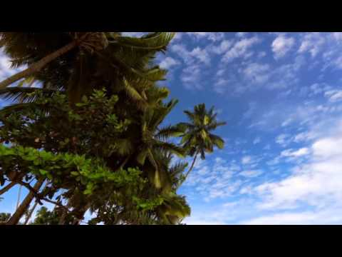 30' RELAXING in PARADISE - TROPICAL BEACH PALM TREES IN THE WIND
