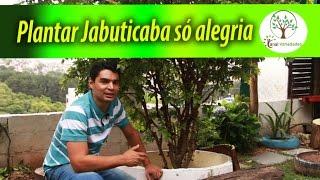 JABUTICABA, PLANTAR EM CASA