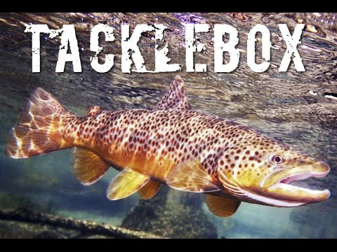 Trout Fishing Tackle Box