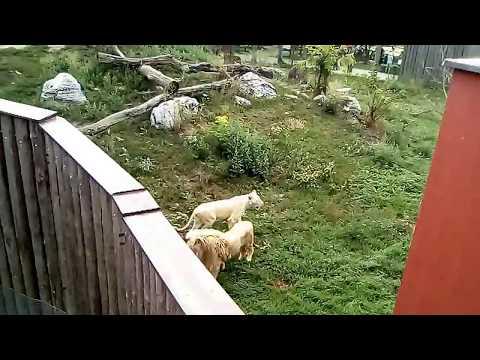 Lvi a tygři Hodonín