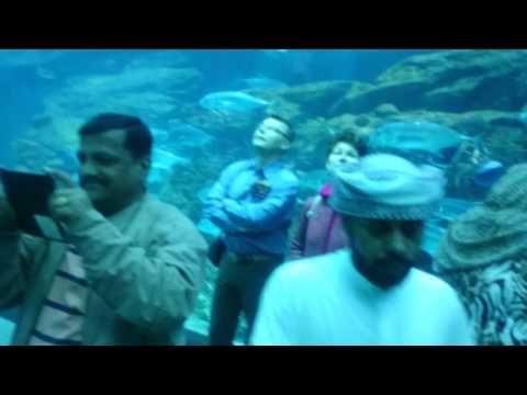 Dubai Mall Aquarium, United Arab Emirates