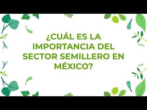 ¿Cuál es la importancia del sector semillero en México?