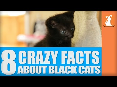 8 Crazy Facts About Black Cats