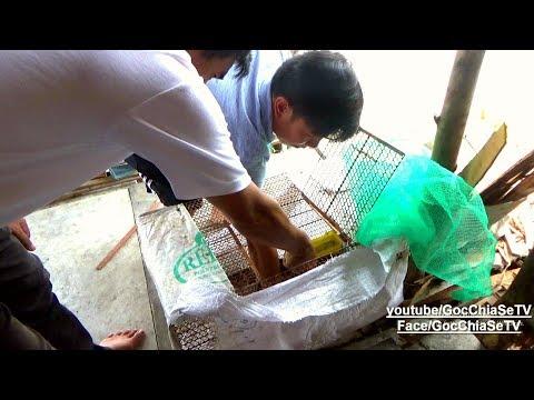 Làm Thịt Hổ Tiễn Anh Mười Về Nước ☆ Góc Chia Sẻ