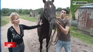 Histoire d'un cheval : Punchy
