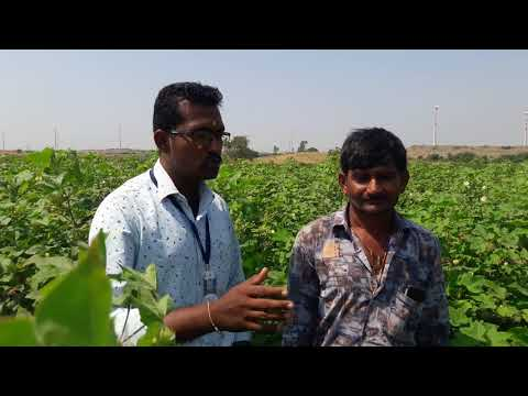 Orgenic Farming Gujarat
