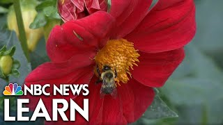 NBC News Learn: Flowering Plants thumbnail