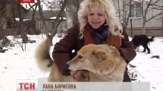 Во Львове ищут хозяев для двухлетней собаки Нади