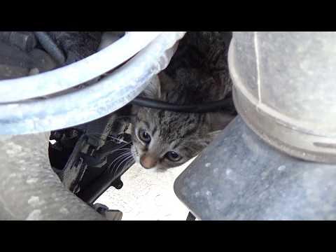 Проехал на автомобиле с котёнком в моторе