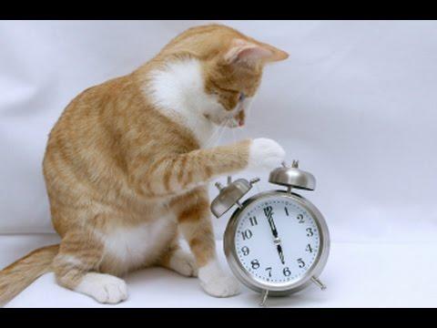 Cat Stevens Funny