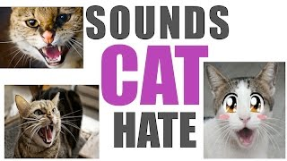 Sounds Cats Hate All Time | HQ