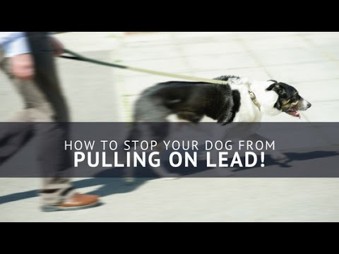 STOP PULLING! Top 6 Tips For A Loose Lead Walk