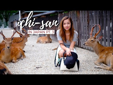 Ichi-san in Japan Part 3 | Finding Kenshin in Kyoto, Nara Deer Park and Zoo Day