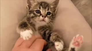 Кому такую красоту и милоту! Котята из промзоны.