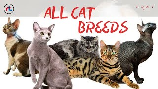 CAT BREEDS ( A  Z ) All TYPES OF CATS IN THE WORLD