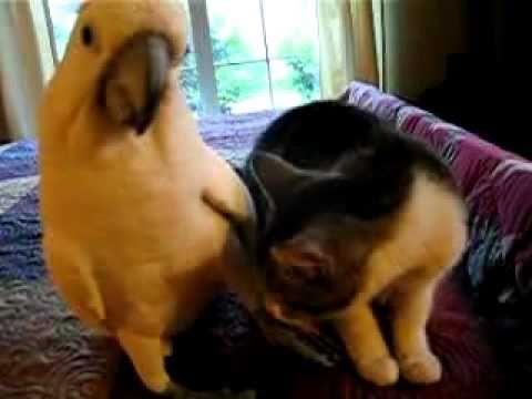 Игры кот Том и его друзья -