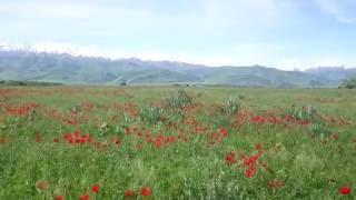 Чуйская долина, Киргизия