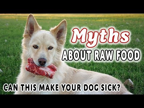 9 Myths About Feeding Raw Food To Dogs