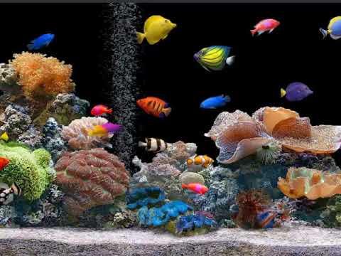 Desktop Wallpaper Fishes And Panda