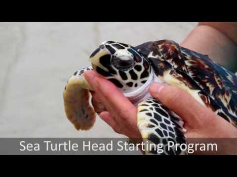 Marine Conservation in Thailand - Pod Volunteer