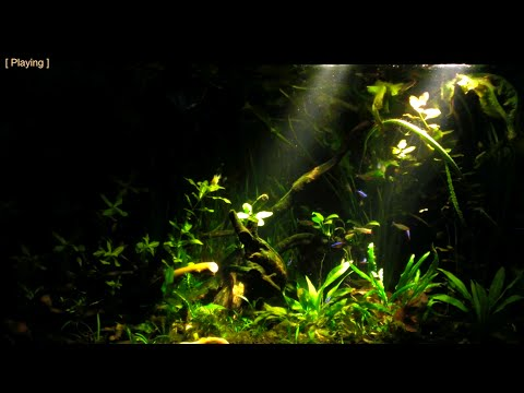 My South American (Amazon) Biotope Aquarium