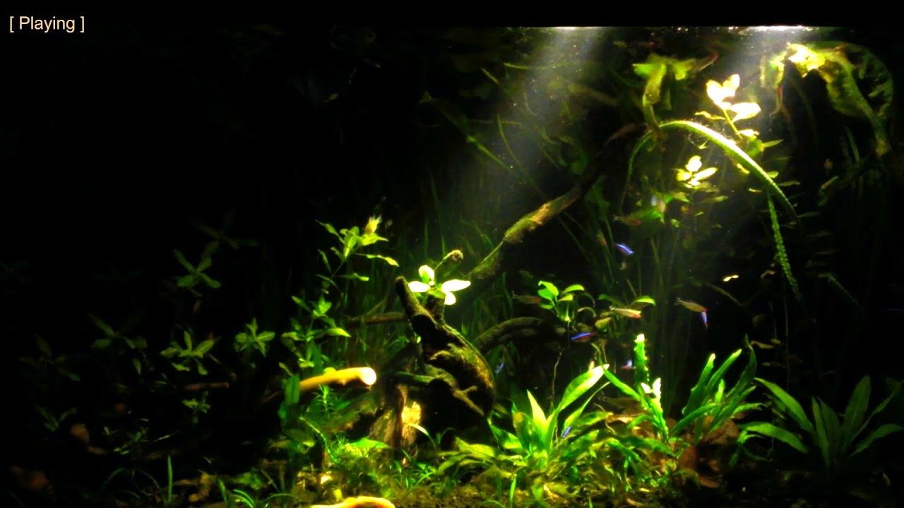 My South American Amazon Biotope Aquarium Youtube