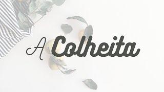 A Colheita | 01/11/2020