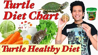 Turtle Diet Chart   How much to Feed Turtle  Turtle Portion Size   Turtle Healthy Food   Indian Tips