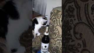 Похмеля кота