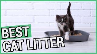 Best Cat Litter | 5 Best Cat Litters 2020  ✅