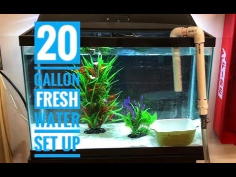 Setting Up A 20 Gallon Freshwater Fish Tank/Aquarium