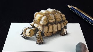 How to Draw a 3D Tortoise | Drawing a Tortoise