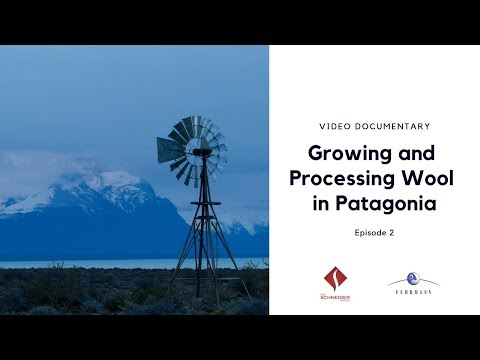 Growing and Processing Organic and RWS Certified Wool in Patagonia - Episode 2