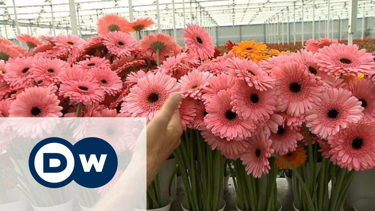 Цветы голландская технология