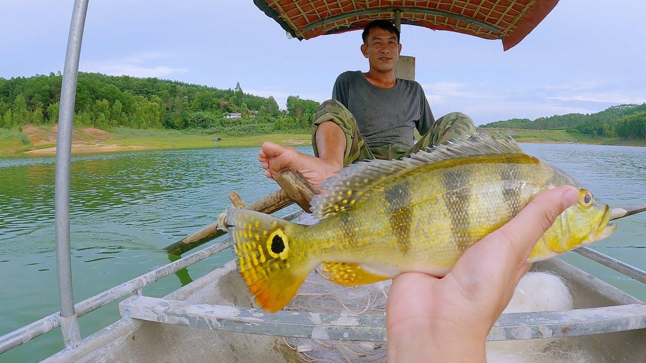 Săn đặc sản cá Hoàng Đế ở hồ Thác Bà Yên Bái
