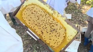 27 01 58 ฟาร์มผึ้ง