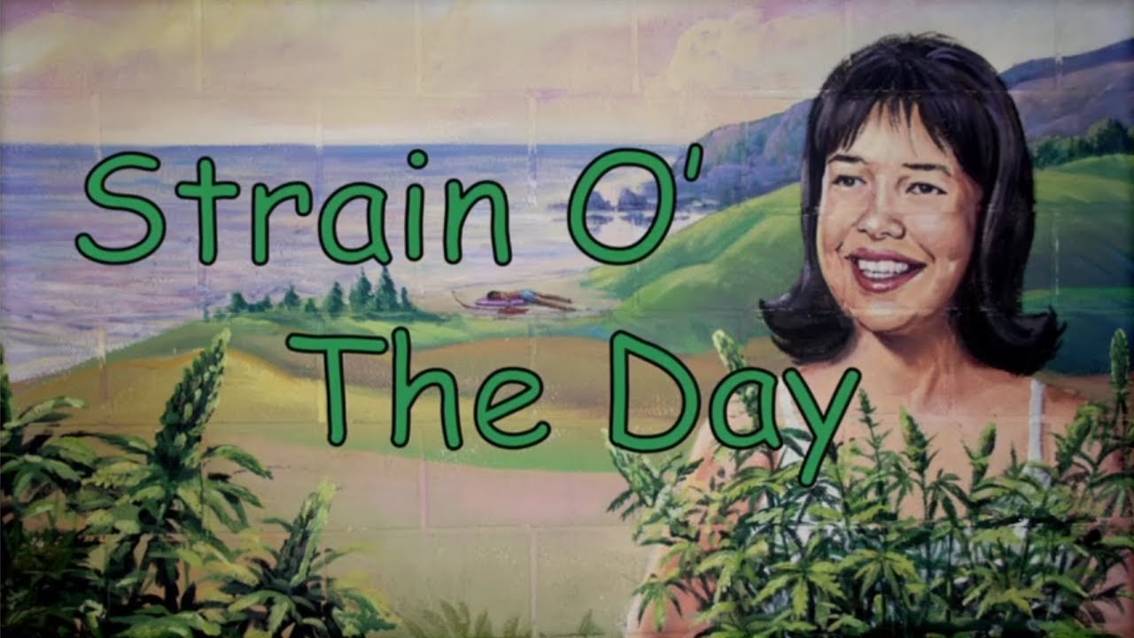 Download Disjointed: All clips of Strain Of the Day (Season 1)