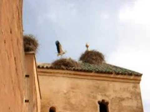 El Badi Palace Storks