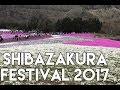 [Life Journey] Shibazakura Festival 2017