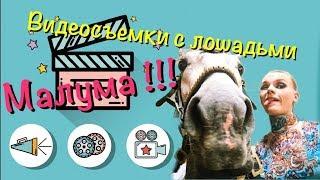 Maluma в гостях у Центра джигитовки. Видеосъемки с лошадьми.