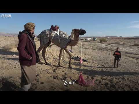 سباق الهجن في جنوب سيناء: تراث بدوي لتنشيط الاقتصاد  - 18:54-2019 / 2 / 20