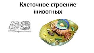 1. Клеточное строение животных (7 класс) - биология, подготовка к ЕГЭ и ОГЭ 2019