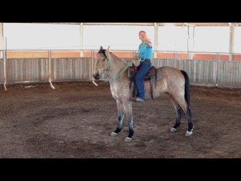 Missouri Fox Trotter Gelding 6 Year Old Rescue Horse