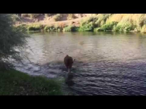 2016 September Walker River