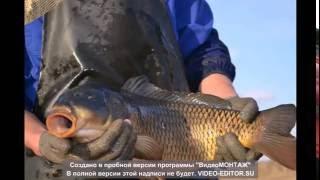 Разведение рыбы в Казахстане. Разведение карпа. Жизнь Карагандинского рыбопитомника. Часть первая.(Некоторые части видео Вы уже видели. В этом видео показаны основные моменты разведения рыб, в основном карп..., 2014-09-21T11:19:56.000Z)