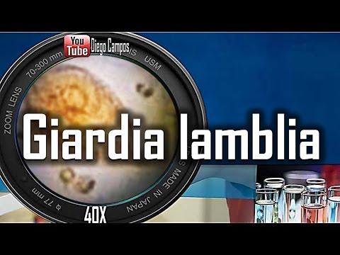 Giardia lamblia - Trofozoito en movimiento