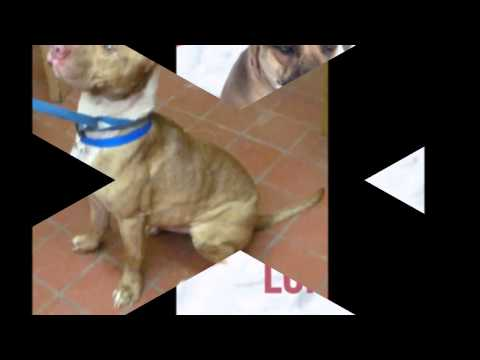 Urgent Stark County Dogs