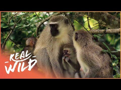 Street Monkeys -