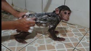 Baby Monkey | Cute Doo Gets A Bath